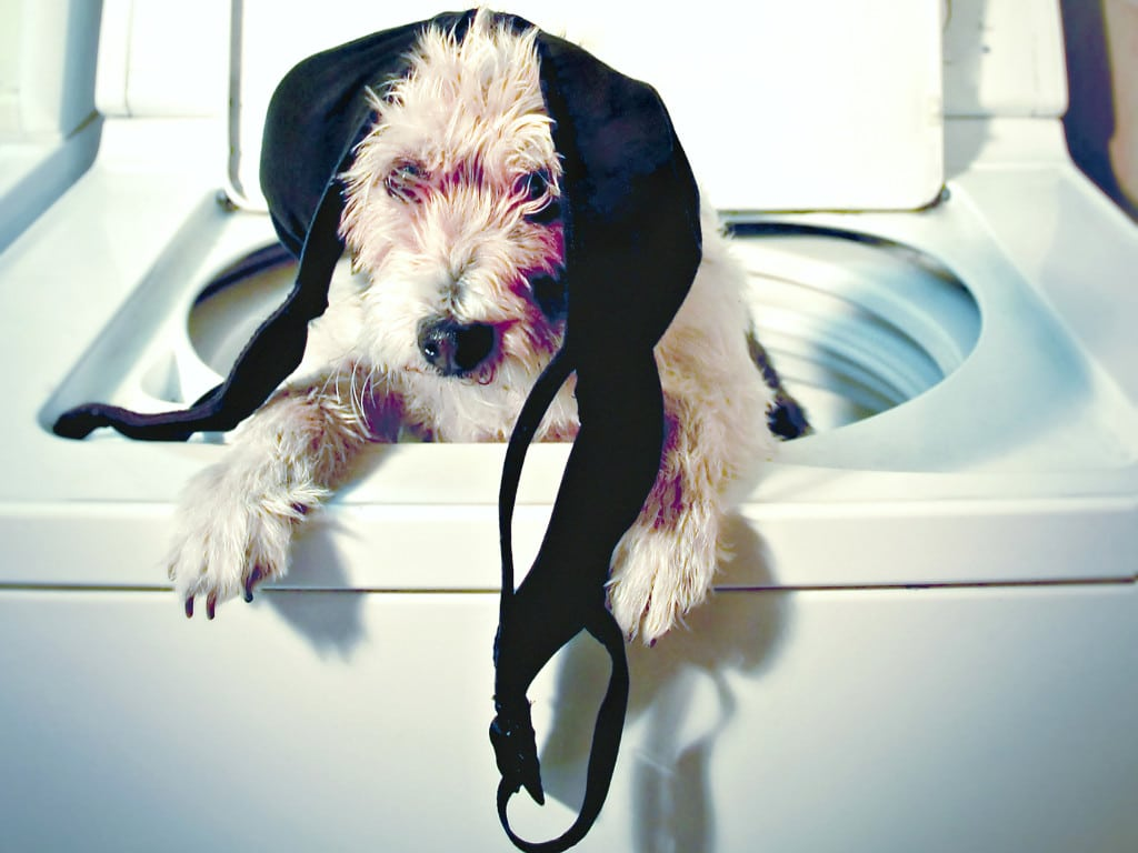 dog in wasmachine with bras