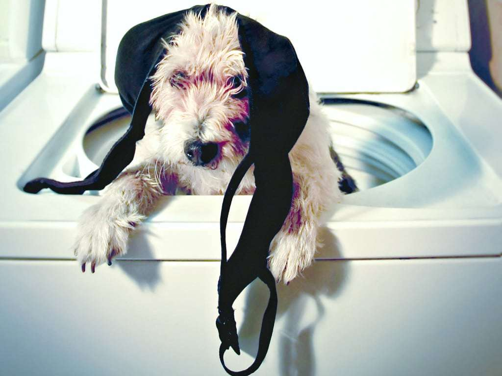 dog in wasmachine with bras