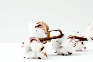 illustrating article on organic cotton